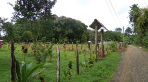 90 Acre Farm with Subdivideable Land Outside of Quepos