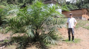 Income Producing Palm Oil Farm In Southern Costa Rica On 245 Acres