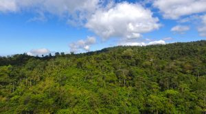 Conservation Land In Southern Costa Rica To Protect Wildlife Corridors