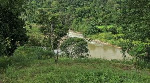 Land Parcel With River View Building Sites And Land Planted With Crops