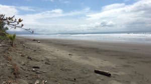 Almost 1/2 Acre Of Beachfront Concession Land In Playa Matapalo